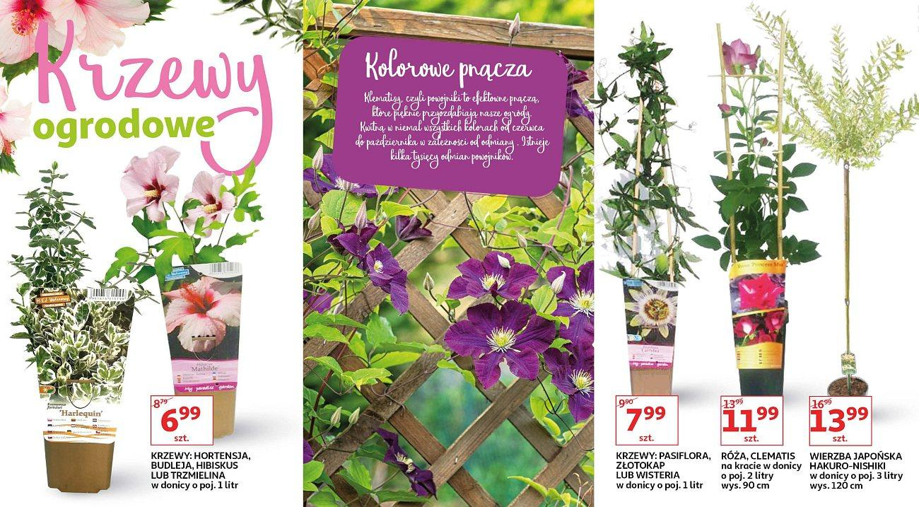 Gazetka promocyjna Auchan do 13/09/2018 str.7