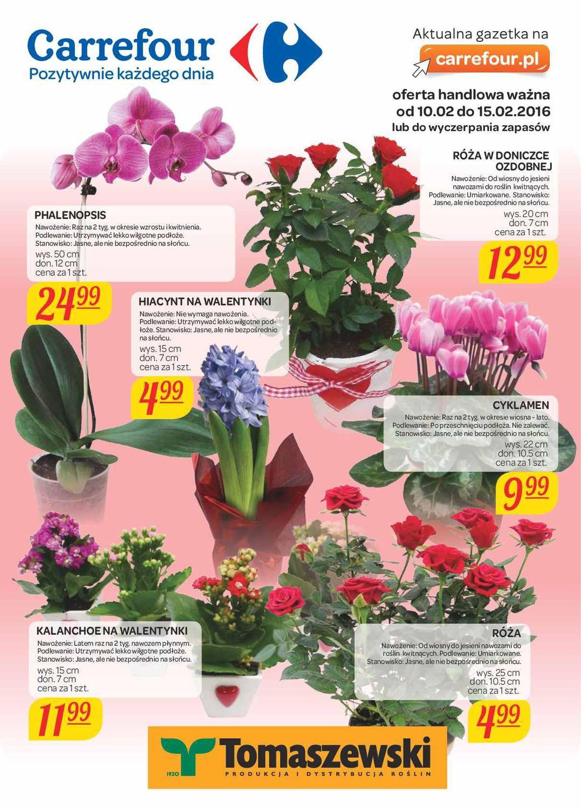 Gazetka Promocyjna I Reklamowa Carrefour Kwiaty Na Walentynki Od